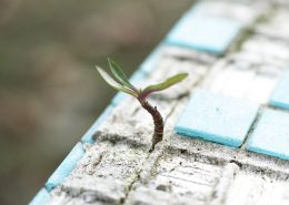 hope and growth